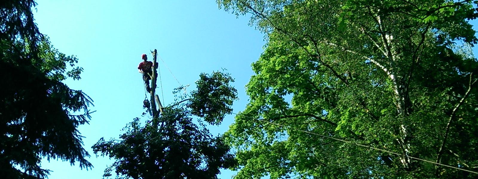 Drzewa_001
